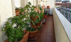 Aqui la terraza y sus habitantes.