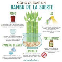 Eco Garden, Natural Garden, Organic Gardening, Gardening Tips, Wine Country Gift Baskets, Lucky Bamboo, Terrarium Plants, Farm Gardens, Green Life