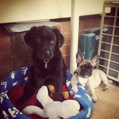 We Partner With Pet Rescue Organizations Pinterest Adoption Save Animals And Pet Adoption