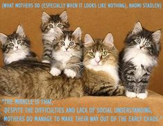 New Parent Quotes, Maine Coon Cats, New Parents, Cat Love, Famous People, Animals, Image, Animales, Animaux