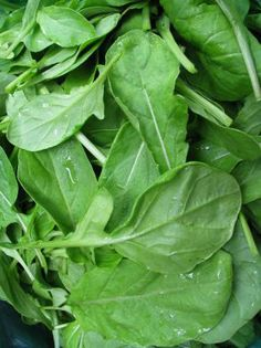 """Astro Arugula (Eruca sativa) Astro is an arugula selected for less deeply lobed leaf shape (""""strapleaf""""), and mild f..."""