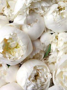 ♔ White peonies