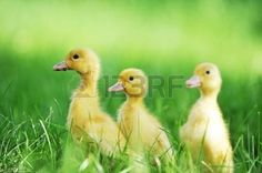 Animals Spring Stock Photos Images, Royalty Free Animals Spring Images And Pictures