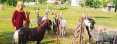 Tranquila Park Goats, Horses, Animals, Animales, Animaux, Animal, Animais, Horse, Goat