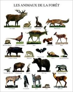 activites animaux de la foret