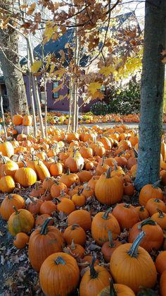 Primitive Autumn Autumn Aesthetic, Autumn Scenes, Fall Pumpkins, Fall Harvest, Autumn Inspiration, Fall Season, Hello Autumn, Autumn Day, Autumn Leaves