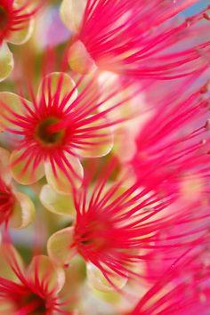 ~~Candy Pink by Lorraine Deroon~~