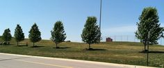 Lewis University after services Tree Transplanting, Specimen Trees, University, Country Roads, Shades, Landscape, Plants, Scenery, Sunnies