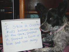 """I stole a crippled kid's balloon animal at the park, popped it, pooped in front of him, and ran away."" Miley the bully & crasher of children's birthday parties. The sign of shame Funny Animal Pictures, Dog Pictures, Funny Animals, Animal Pics, Dog Shaming Photos, Animal Memes, Animal Humor, Poor Dog, Sweet Stories"