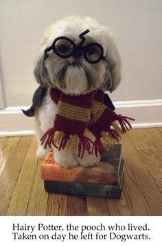 I know what my dog is going to be for Halloween!!
