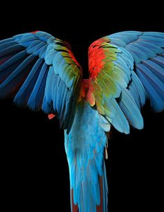 macaw_123-EA-Final-Print-File.jpg