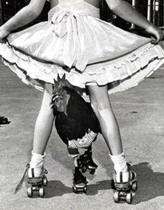 Rollerskating Rooster - Photographer: Leigh Wiener, 1954.