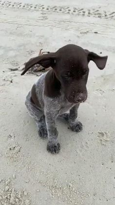 Cute Animal Memes, Cute Animal Pictures, Cute Funny Animals, Cute Baby Animals, Funny Dogs, Baby Animal Videos, Funny Animal Videos, Pet Videos, Videos Funny