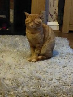 MISSING L14……..ginger Tom cat, not been home since he escaped last night (when letting the dog out), really worried as he was castrated yesterday morning and obviously he's still in recovery, if anyone see's him can you please contact me ASAP thanks