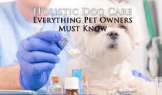 """When people hear the term """"holistic"""" they typically think about alternative medicine. It brings to mind acupuncture and herbal remedies alone. This is a common misconception, as holistic dog health actually combines several traditional and alternative therapies to treat ailing dogs into a single approach with the focus on what's most important. #holistic #dog #care #veterinary #alternative #pets #dogs"""