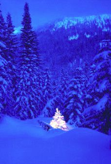 LOVE the light, in the blues, of a Christmas winters evening <3