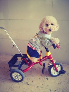 20 Dogs Who Can Bike Better Than You