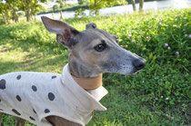 HDL(handsome dog Luciano) ハンサムドッグルチアーノ 今日もお散歩楽しいな!ニンジン大好き