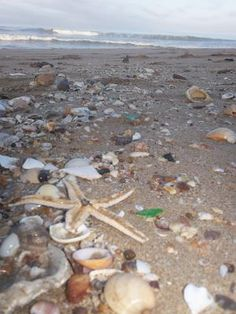 Bounty on the Beach - August 2012 Sea Glass Photo Contest: ~ contest photo submitted by: Rhonda Farris - Kansas City, MO  Where was this photo taken?   Mazatlan Mexico  Date, time of day, and