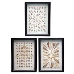 This beautiful collection of shells are an elegant way to bring a touch of the coast to any space. A variety of shells are displayed in three small dark brown shadowboxes. Because natural shells are used, the shell type and layout will vary. Sold as a set of 3 only.      As seen in Elle Decor.