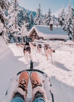 Schnee Glamping Husky Sledding Switzerland Whitepod Hotel Travel & Adventure A Magic Weekend Snow Gl Winter Love, Winter Snow, Winter Christmas, Christmas Christmas, Glamping, Outdoor Reisen, Husky, Winter Pictures, Landscape Photography