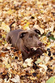 autumn, puppies, awesomeness :)