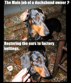 24 #dachshund Memes That Will Totally Make Your Day | SayingImages.com