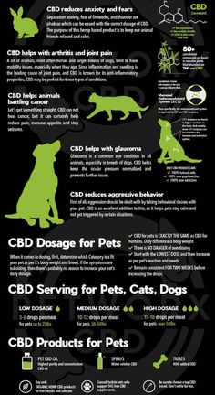 Medical Benefits Of Cannabis, Medical Marijuana, Marijuana Facts, Natural Health Remedies, Hemp Oil, Pharmacology, Ganja, Chiropractic, Pets