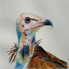 Water colour Bird painting. Hooded Vulture Bird Paintings, Vulture, Watercolor Bird, Fine Art, Colour, Animals, Paintings Of Birds, Color, Animales