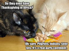 Black comedy, cute kitties.