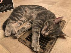 Hogging the warmest spot in the house. http://ift.tt/2hRVV22