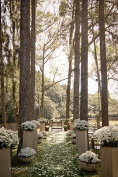 Wedding Aisle | outdoor wedding ceremony • romantic wedding in the woods with marguerites lining the path