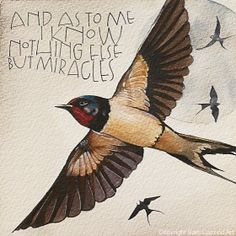 Find beauty everywhere By Sam Cannon 'Down To Earth Cards' Wort Collage, Buy Prints Online, Sam Cannon, Lovely Creatures, Animal Sketches, Beautiful Birds, Beautiful Pictures, New Art, Art Drawings