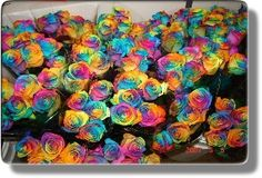 Rainbow Rose (happy rose) i want some!! very expensive !!