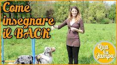 Addestramento/Educazione cani n° 18 - Come insegnare il BACK | Qua la Zampa