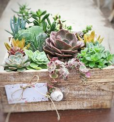 Your place to buy and sell all things handmade Container Flowers, Container Plants, Container Gardening, Succulent Arrangements, Cacti And Succulents, Floral Arrangements, Garden Table, Garden Boxes, Potting Tables