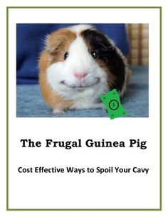 The Frugal Guinea Pig by Kari Place. $0.99. 10 pages. Kari Place, author of the Cheap Or Free series, offers some economical ways to spoil your pet guinea pig.  Here you will find a long list of descriptive ideas on how to provide your cavies with toys, fun activities, and treats each day without breaking the bank.                            Show more                               Show less