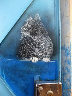 Cat on blue by C215 in Morocco