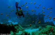 Shipwreck unmarked in Shark and Yolanda Reef - Raz Mohammed Park South Setor - Red Sea - Egipt