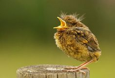 Credit: Alex Berryman/Woodland Trust A young robin in Oakley park, Fleet, by Alex Berryman was also adjudged as a highly commended photograp...