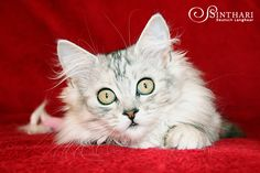 Levana von Sinthari, 14 Wochen alt