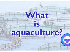 Aqua Culture, Marine Life, Agriculture, Conservation, Discovery, Fun Facts, Seafood, Personalized Items, Sea Food