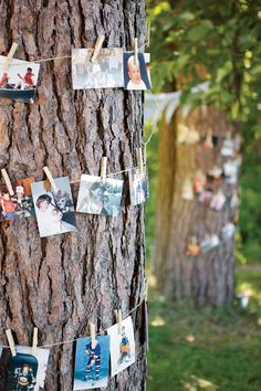 Display photos of the bride, groom, wedding party, or guests by attaching photos to twine and wrapping them around a tree.