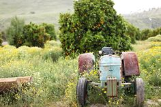 blue tractor with fruit trees