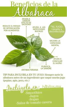 ... queda riqui riqui en tooodou Vegan Life, Doterra, Parsley, Healthy Lifestyle, Plant Leaves, Medicine, Nature, Gardens, Healthy Dieting