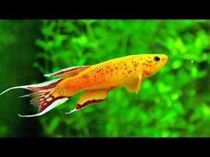 ▶ Colour Therapy - Aquarium - YouTube