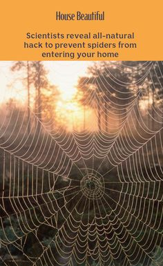 Scientists reveal all-natural hack to prevent spiders from entering your home Peppermint Oil, Spiders, Scientists, Countries, Beautiful Homes, Life Hacks, Exotic, Clever, How To Apply