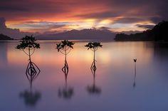 Triboa Mangrove Park Subic Bay, Morong, Bataan...