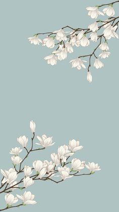 Flower Background Wallpaper, Flower Phone Wallpaper, Kawaii Wallpaper, Flower Backgrounds, Wallpaper Backgrounds, Spring Wallpaper, Nature Wallpaper, Simple Wallpapers, Pretty Wallpapers