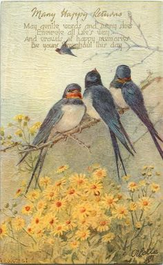 Postcard: Three swallows on branch over yellow daisies, one flying in distance - artist: a. Vintage Ephemera, Vintage Art, Vintage Postcards, Illustrations, Illustration Art, Three Little Birds, Yellow Daisies, Wildlife Art, Bird Prints